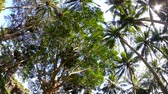 Views of the tropical forest with palm trees and clear blue sky.