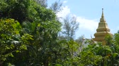 View on the evergreen vegetation of a tropical forest.