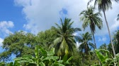 View of palm trees in a tropical forest with clear blue sunny sky in the background. Dostupné videozáznamy