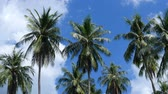 big leaf : View of palm trees in a tropical forest with clear blue sunny sky in the background. Stock Footage