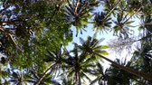 céu claro : Views of the tropical forest with palm trees and clear blue sky.
