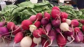 turp : red radish closeup on the market