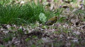 Pájaro chloris greenfinch en el parque Archivo de Video