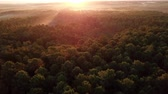 Aerial view of beautiful green forest at morning sunrise in landiras, south of france Vídeos