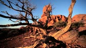 сбалансированный : Red sandstone rock formations sculptured by nature in an arid  desert environment
