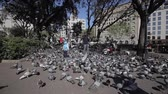 голубь : Barcelona, Spain - April 27, 2018: An adult man feeding many doves in the park