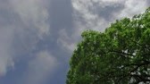 крупные планы : Green tree isolated on the blue sky and clouds background 3 axis stabilized shot