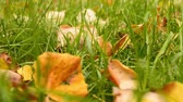 blur : Grass with leaves with slide effect in autumn