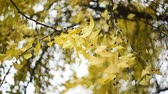 группа объектов : Ginko biloba abstract slow motion with bokeh.