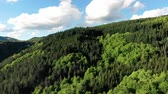 Mountain forest vertical fly over woods