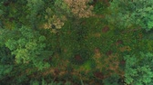Aerial top view of summer green trees in forest background. 4K. Vídeos