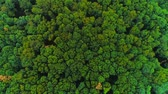 4K aerial view moves rising up from green forest of dense mixed tree tops. Amazing nature background.