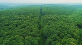 Aerial view of seamless transition of dense forest growth and a long footpath in the middle of it. Vídeos