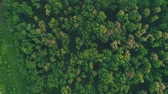 trottola : Aerial view. Whirling drone over trees in forest. 4K.