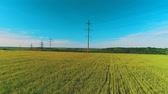 mounted : Aerial view of broad fiels with crops and electric poles in rural area. 4K. Stock Footage