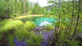 Blue geyser lake in Altay mountains. Siberia. Russia. 4K