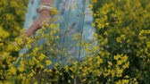 elbise : A beautiful young girl dressed in a blue dress walks thoughtfully across a field of yellow flowers. He touches flowers with his hands. Smiles and laughs Stok Video