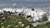 rocky coastline with flowers in foreground
