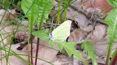 Small butterfly resting on a leaf Stock Footage