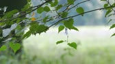 branches of a tree move slowly in the wind Stock Footage