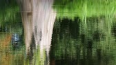 water surface with reflections Stock Footage