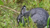 Rabbit in the high grass while eating