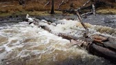 log : river over logs Stock Footage