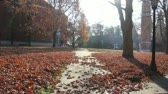 dorm : Still shot of red leaves on ground and walkway at university on sunny day