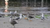 telephoto lens : Seagulls fight over a bread bowl