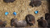 живая природа : Cute Little Bunnies in a Cage Overhead Top View Footage