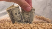 crop loss : Man taking profit from soybean growth and harvest in USA, hand picking dollar banknotes from soy bean heap, 4k uhd footage.