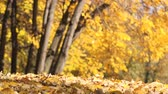 проливая : Slow motion of falling autumn leaves, shedding treetops in park, beautiful fall season scenery with yellow leaves on wind. Стоковые видеозаписи