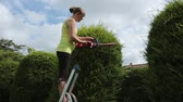 živý plot : A young woman cutting a hedge with a battery powered electric hedge trimmer.