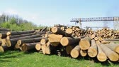 big wooden logs Stock Footage