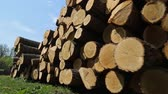 Wooden logs at the sawmill Stock Footage