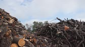 Large piles of firewood in yard Stock Footage