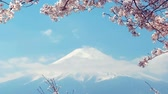 de amor : Mt. Fuji and cherry blossoms swaying in the wind.