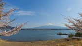teljes virágzás : Timelapse of Mount Fuji, Kawaguchiko lake in spring with sakura cherry blossom tree. Stock mozgókép
