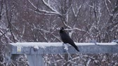 stirred : Crow bird perching on pole in winter season.