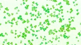 трилистник : Clover leafs falling for St. Patricks day background looped Стоковые видеозаписи
