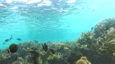 тропический : Time Lapse View Of Underwater Tropical Ocean Стоковые видеозаписи