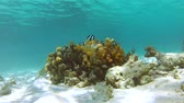 korallenfisch : Zeitraffer View Of Underwater Tropical Ocean Stock Footage