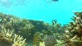 коралловый : Time Lapse View Of Underwater Tropical Ocean Стоковые видеозаписи