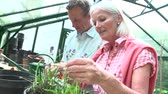 crescente : Slow Motion Shot Of Middle Aged Couple Working In Greenhouse Vídeos