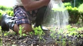 udržitelného : Close Up Of Man Planting Seedlings In Ground On Allotment Dostupné videozáznamy