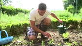 udržitelného : Man Planting Seedlings In Ground On Allotment