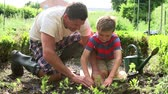 udržitelného : Father And Son Planting Seedling In Ground On Allotment