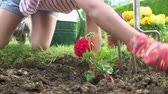 cama : Slow Motion Sequence Of Girl Planting Flower In Garden Bed Vídeos