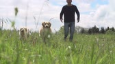 se divertindo : Slow Motion Shot Of Man Exercising Dogs In Countryside