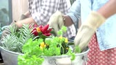 dolly : Close Up Of Couple Planting Rooftop Garden Together Stock Footage